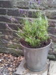 Upcycled lavender pot