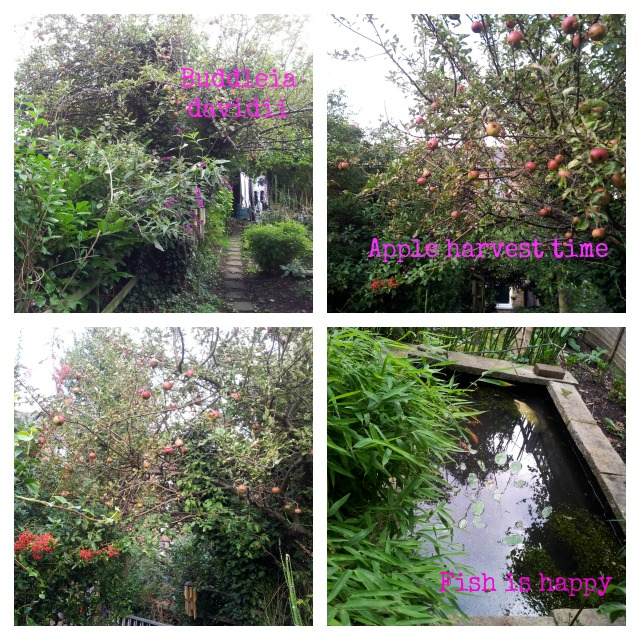 secretgardenhome autumn garden apple tree buddleia pond