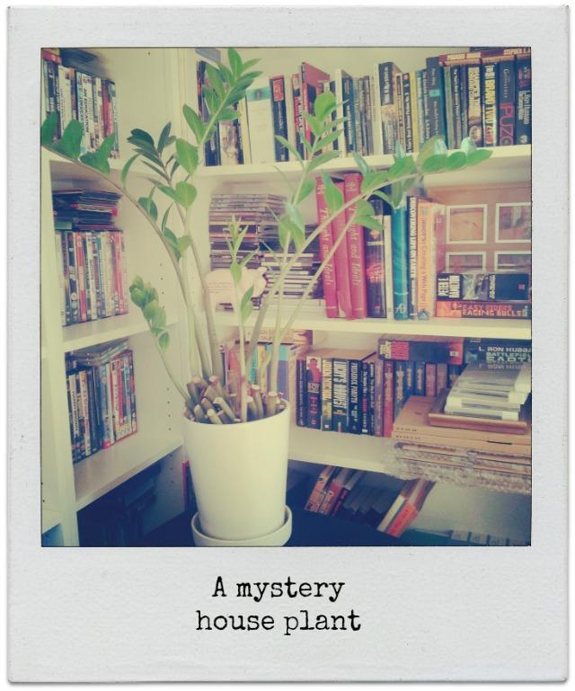 a mystery house plant
