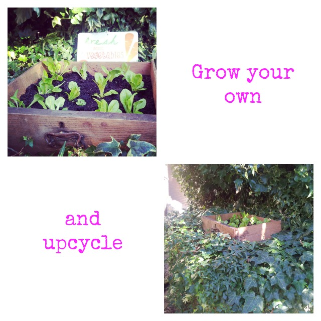 grow your own and upcycle
