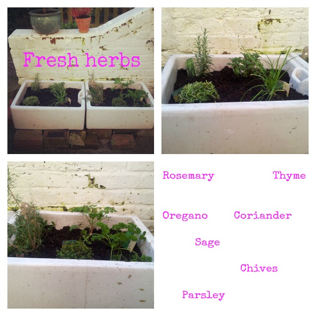 Grow your own fresh herbs
