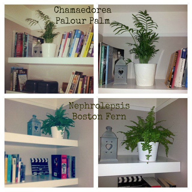 house plants for shady rooms