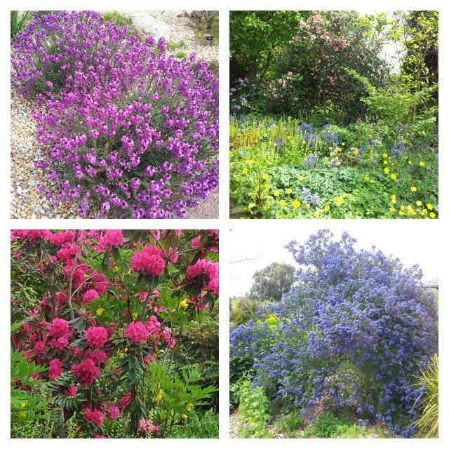 rhs garden Hyde Hall colours
