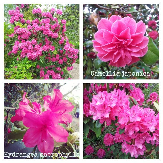 rhs garden Hyde Hall flowers