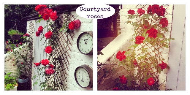 secretgardenhome courtyard roses