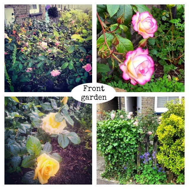secretgardenhome front garden roses