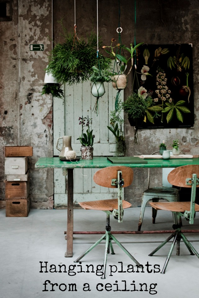 79ideas_beautiful_studio hanging plants from a ceiling