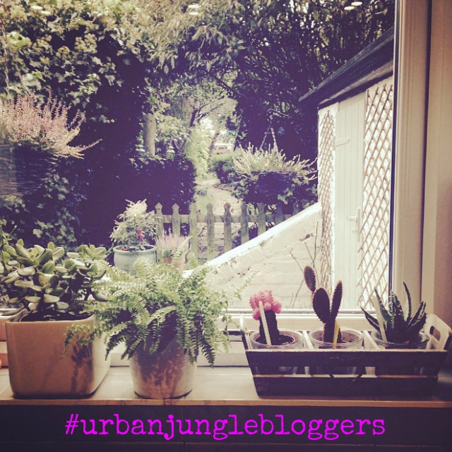 My plant shelfie, Urban Jungle bloggers