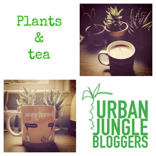 Plants and tea, Urban Jungle Bloggers