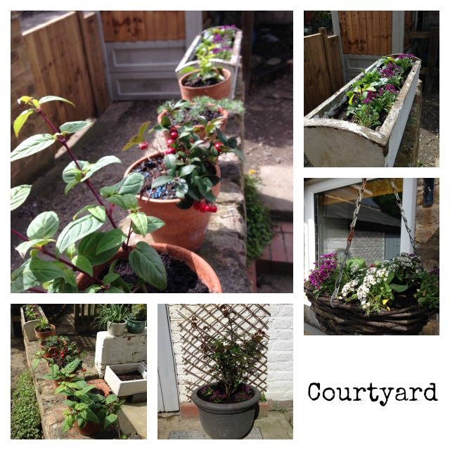 Courtyard, new plants, flowers, cottage garden, secretgardenhome