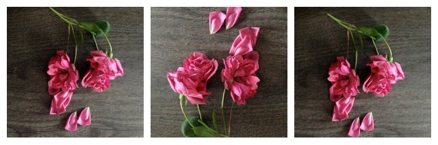 Dying rose, pink rose, flower composition