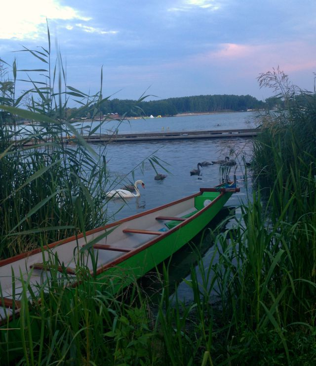 Lake Ukiel, Swans, beautiful lake, Poland, Mazury